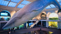 American Museum of Natural History Walking Tour, New York City, Museum Tickets & Passes
