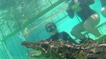 Cape Town Crocodile Cage Dive Winelands Tour, Cape Town, Cultural Tours