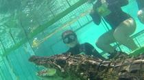 Crocodile Cage Dive Winelands Tour, Cape Town, Wine Tasting & Winery Tours