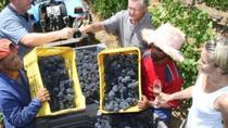 Private Chauffeur Wine Tour from Stellenbosch, Stellenbosch, Day Trips