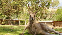 Morning at Bonorong Wildlife Sanctuary: Half-Day Tour from Hobart, Hobart, Helicopter Tours
