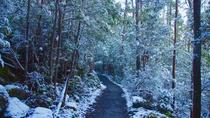 Mt Wellington Winter Walking Tour from Hobart, Hobart, Seasonal Events