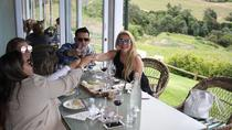Half-Day Constantia Wine Tour from Cape Town, Cape Town, Wine Tasting & Winery Tours