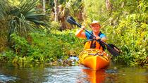 Wekiva River Kayak Tour, Orlando, Kayaking & Canoeing