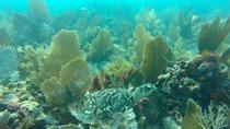 Escambron Beach Guided Scuba Diving Tour for Beginners, San Juan, Scuba Diving