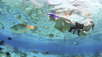 Private Stingray City and Snorkeling Full Day Charter, Cayman Islands, Snorkeling
