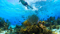 Private Stingray City and Snorkeling Half Day Charter, Cayman Islands, Half-day Tours