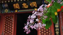 Private Beijing Tour to Fayuan Temple with Tea Tasting at Maliandao Tea Street, Beijing, Cultural ...