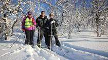 Cross Country Skiing in the Arctic Tromso, Tromso, Ski & Snow