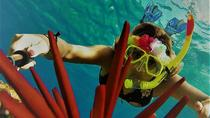 Excursiones de aventura a los arrecifes de Maui a bordo del Ocean Freedom and Reef Explorer