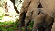 10 Days Kenya Private Luxury Wildlife Safari, Nairobi, Multi-day Tours