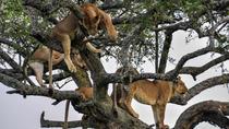 12Days Best of Kenya and Tanzania Wildlife Safari, Nairobi, Multi-day Tours