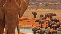2days Amboseli Overnight Safari, Nairobi, Overnight Tours
