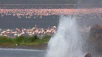 2days Guided Flamingo Tours to Lake Bogoria & Lake Nakuru From Nairobi, Nairobi, Multi-day Tours