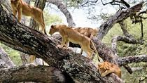 2Days Lake Manyara and Ngorongoro Crater Camping Safari, Arusha, Hiking & Camping