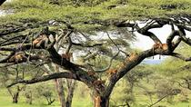 3-Day Best Camping Safari in Tanzania Parks, Arusha, Hiking & Camping