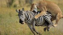 3-Day Maasai Mara Camping Safari, Nairobi, Hiking & Camping