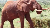3 Tage Best of Tsavo Ost & Tsavo West Wildlife Safari von Mombasa, Mombasa, Multi-day Tours