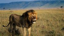 4-Day Lake Naivasha & Masai Mara Private Luxury Safari, Nairobi, Multi-day Tours