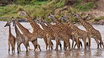 4days: Amboseli, Tsavo West & Tsavo East Wildlife Safari, Nairobi, Multi-day Tours
