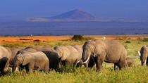 5day: Best of Kenya Big 5 Wildlife Safari to Amboseli & Tsavo West National Park, Nairobi, ...