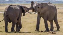 5Days Affordable Wildlife Safari in Kenya, Nairobi, Multi-day Tours