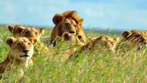 7days Breathtaking Kenya Safari, Nairobi, Multi-day Tours