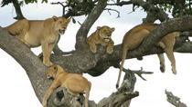 7Days Tanzania Lodge Safari Lake Manyara Serengeti Ngorongoro Tarangire Safaris, Nairobi,...