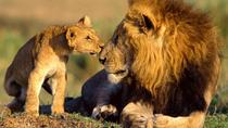 9-Days Best Kenya Family Wildlife Safari from Nairobi, Nairobi, Multi-day Tours