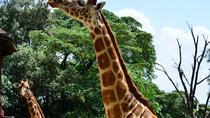 Giraffe Center Half Day Trip from Nairobi, Nairobi, Day Trips