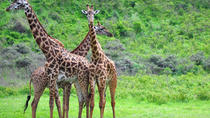 Guided Day Tour To Arusha National Park From Arusha, Arusha, Attraction Tickets