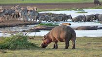 Lake Manyara National Park Day Trip From Arusha, Arusha, Day Trips