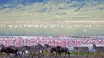 Lake Manyara National Park Day Trip From Arusha