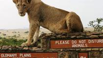 Nairobi National Park, Giraffe Center and Elephant Orphanage Day Tour from Nairobi, Nairobi, Day ...