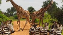 NAIROBI NATIONAL PARK: HALF DAY GUIDED TOUR FROM NAIROBI, Nairobi, Attraction Tickets