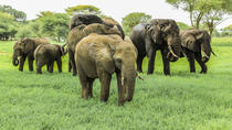 Tarangire National Park Guided Day Tour From Arusha, Arusha, Attraction Tickets