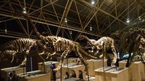 1-Day Dinosaur Tour in Kunming, Kunming, Cultural Tours