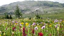 Sunshine Meadows Vistas - Easy Hike - Mondays and Saturdays, Banff, Hiking & Camping