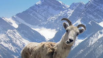 Wilderness and Nature Tour, Banff, Nature & Wildlife