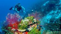 Scuba Diving Tours at Koh Tao, Koh Samui, Scuba Diving