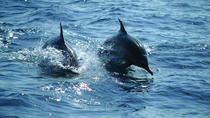 Dolphin Cruise, Muscat, Dolphin & Whale Watching