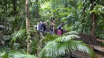 Full Day Cape Tribulation and Daintree Rainforest Tour, Port Douglas, Helicopter Tours