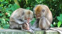 Private Tour: Full-Day Bali Paradise Tour with Monkey Forest Including Buffet Lunch and Dinner,...