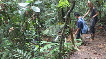 Private Tour: Half Day Bukit Lawang Practice Trek Tour, Medan, Private Sightseeing Tours