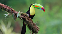 Early Bird Watching Tour, La Fortuna, City Tours