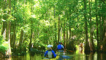 2-Hour Cypress Forest Guided Kayak Tour, Orlando, Kayaking & Canoeing