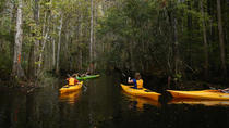 2-Hour Eco-Transition Guided Kayak Tour, Orlando, Kayaking & Canoeing