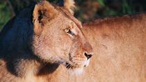 Full Day Kruger National Park Game Drive, Kruger National Park, Day Trips