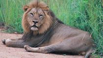 Kruger National Park Morning Game Drive, Kruger National Park, Day Trips
