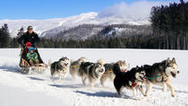 Dogsled Adventure in Mont-Tremblant, Mont Tremblant